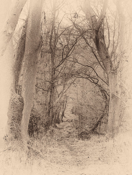 Into Fairyland